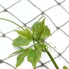 Support For Climbing Plants - climbing plant support net greenmylife anyone can garden
