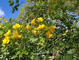 native south florida plants members u0027 day plant sale 2012 fairchild garden 33156