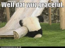 Fu Memes - animal capshunz kung fu panda funny animal pictures with