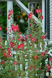48 best old fashioned flower garden images on pinterest flowers