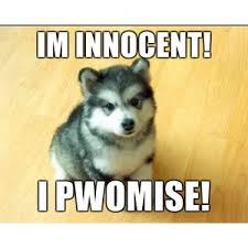 Meme Courage Wolf - babby courage wolf im innocent i pwomise meme generator