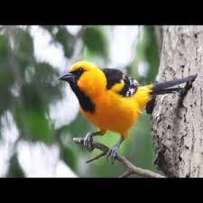 Backyard Wild Birds How To Attract Birds Landscaping Pasadena