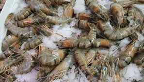 Backyard Shrimp Farming by How To Start Freshwater Shrimp Farming Sciencing