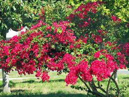 flowering trees in florida pictures reference