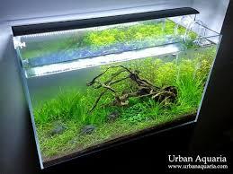 Substrate Aquascape Urban Aquaria Anubias U0027petite U0027 Carpet Super Glue Pebbles