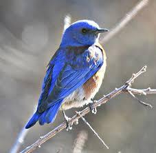Utah birds images Birds of utah kind of bird for mexico in utah dwr profile jpg