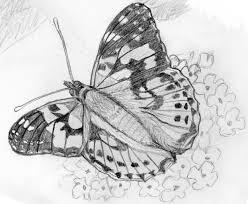 butterfly sketch u2013 blue photos