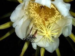 pollination wikipedia