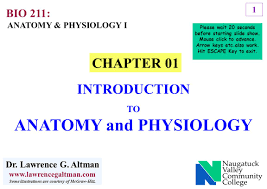 Anatomy Slides 1 Chapter 01 Introduction To Anatomy And Physiology Anatomy
