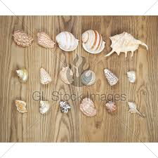 assorted seashells assorted seashells on aged wood gl stock images