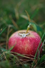 top 25 best apple orchard ideas on pinterest apples buy fruit