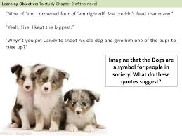 australian shepherd quotes learning objective to study chapter 2 of the novel ppt download