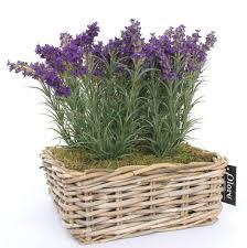 indoor plants india what are the best indoor plants to grow in india quora