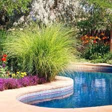best 25 plants around pool ideas on landscaping