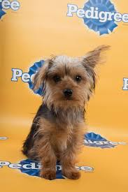 puppy bowl xi starting lineup photos puppy bowl animal planet