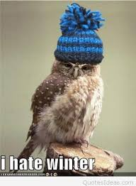 Winter Meme - funny bird meme quote i hate winter