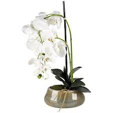 faux orchids white 21 high faux orchids in beige ceramic pot 2w751 ls plus