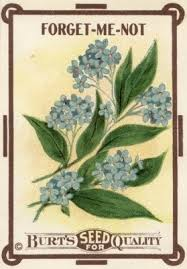 forget me not seed packets forget me not seed packet