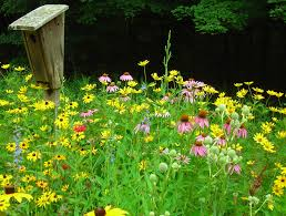 new jersey native plants learn about jersey friendly plants jersey friendly yards
