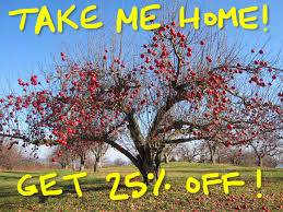 big sale 25 fruit trees for planting in your backyard or