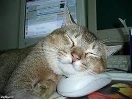 Sleepy Cat Meme - sleepy cat memes imgflip