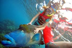 finding nemo dory and wally at the gbr around the globe