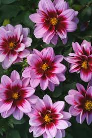 Nice Flower Picture - 149 best flowers images on pinterest flowers plants and nature