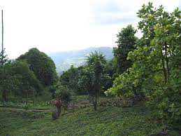 plantation for sale in puerto plata dominican republic