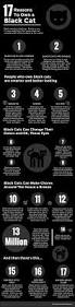 best 20 black cat quotes ideas on pinterest u2014no signup required