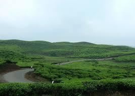 Teh Kayu Aro berwisata ke perkebunan teh kayu aro