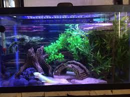 11 best axolotl images on axolotl care aquarium ideas
