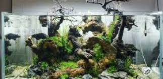 Aquascaping Techniques What Is Aquascaping