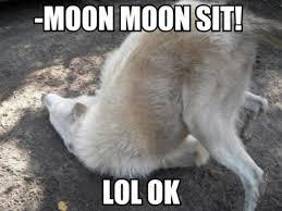 Crazy Wolf Meme - where did iconic internet memes originate scoopfed