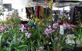 Hilo Flowers - hilo archives hawaii picture of the day