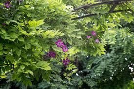 seven climbing plant combinations gardenersworld com