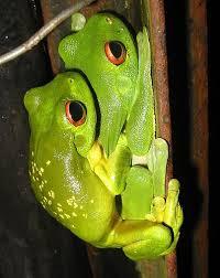 wokawok tattoos frog
