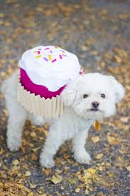 Halloween Costumes For Dogs Pet Halloween Costume Cupcake Lovely Indeed