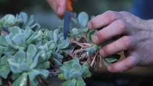 video how to make a succulent wreath martha stewart