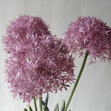 allium flowers three faux allium stems in vase by beaux faux notonthehighstreet
