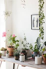 Interior Garden Plants by 313 Best Plants And Plant Arrangements Images On Pinterest