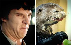 Cumberbatch Otter Meme - benedict cumberbatch otter meme 28 images so we all know that