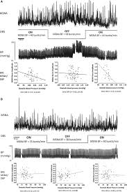 differentiated baroreflex modulation of sympathetic nerve activity