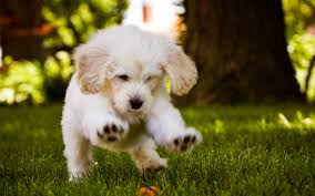 cute dog wallpapers widescreen for cute dog wallpaper animals 3d full hd pics