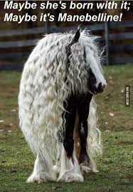 Hair Extension Meme - dump a day funny animals of the day 28 pics horse breeds