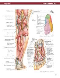 Netter Atlas Of Human Anatomy Online Netter Atlas Of Neuroanatomy And Neurophysiology