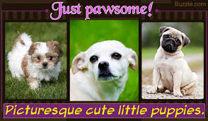pin worthy pictures of the cutest puppies in the world awww