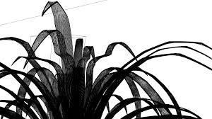 Spider Plant Spider Plant Mesh By Shadyness On Deviantart
