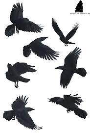 129 best tattoo ideas images on pinterest tattoo ideas bird