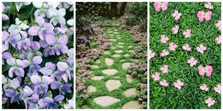 low light outdoor plants 11 best ground cover flowers u0026 plants low growing perennial flowers