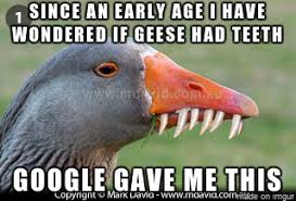Goose Meme - geese with teeth meme on imgur